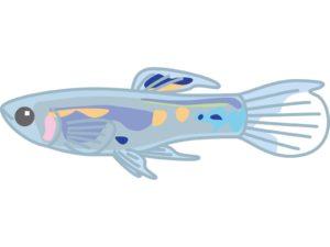 台風魚の名前